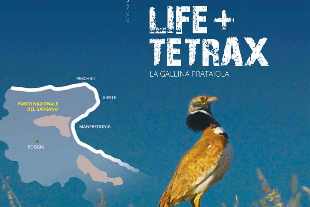 tetrax1