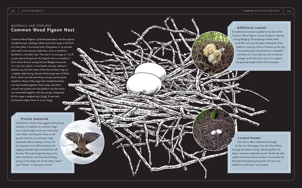 nido colombaccio